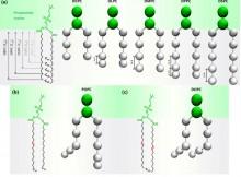 lipid models